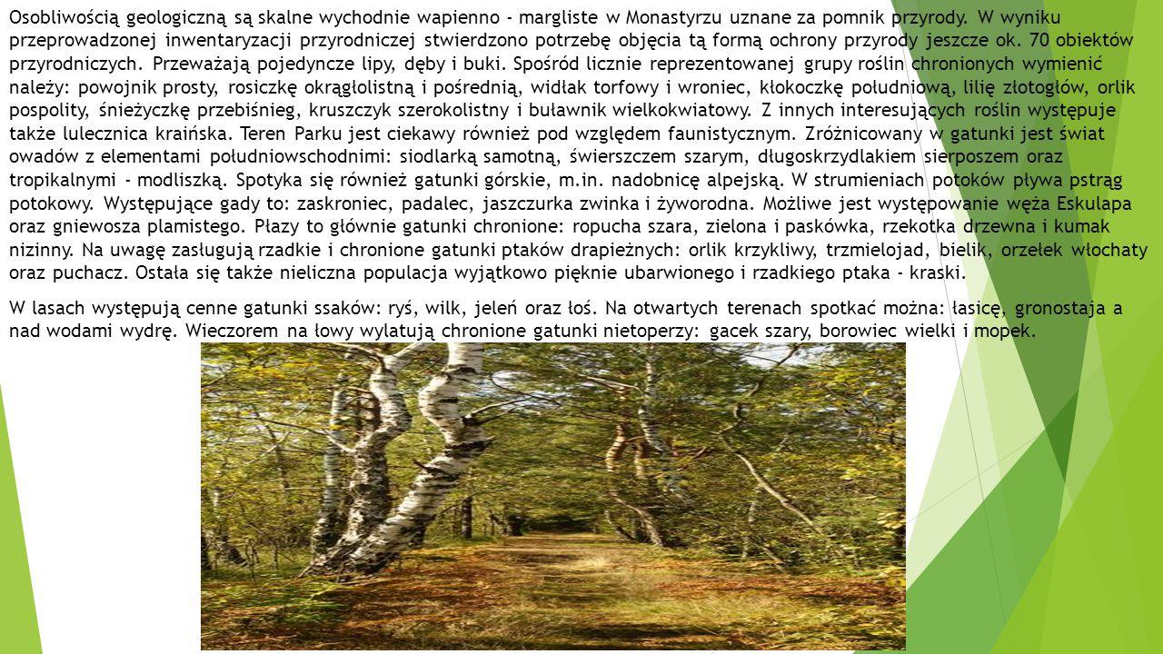 Osobliwością geologiczną są skalne wychodnie wapienno - margliste w Monastyrzu uznane za pomnik przyrody. W wyniku przeprowadzonej inwentaryzacji przyrodniczej stwierdzono potrzebę objęcia tą formą ochrony przyrody jeszcze ok. 70 obiektów przyrodniczych. Przeważają pojedyncze lipy, dęby i buki. Spośród licznie reprezentowanej grupy roślin chronionych wymienić należy: powojnik prosty, rosiczkę okrągłolistną i pośrednią, widłak torfowy i wroniec, kłokoczkę południową, lilię złotogłów, orlik pospolity, śnieżyczkę przebiśnieg, kruszczyk szerokolistny i buławnik wielkokwiatowy. Z innych interesujących roślin występuje także lulecznica kraińska. Teren Parku jest ciekawy również pod względem faunistycznym. Zróżnicowany w gatunki jest świat owadów z elementami południowschodnimi: siodlarką samotną, świerszczem szarym, długoskrzydlakiem sierposzem oraz tropikalnymi - modliszką. Spotyka się również gatunki górskie, m.in. nadobnicę alpejską. W strumieniach potoków pływa pstrąg potokowy. Występujące gady to: zaskroniec, padalec, jaszczurka zwinka i żyworodna. Możliwe jest występowanie węża Eskulapa oraz gniewosza plamistego. Płazy to głównie gatunki chronione: ropucha szara, zielona i paskówka, rzekotka drzewna i kumak nizinny. Na uwagę zasługują rzadkie i chronione gatunki ptaków drapieżnych: orlik krzykliwy, trzmielojad, bielik, orzełek włochaty oraz puchacz. Ostała się także nieliczna populacja wyjątkowo pięknie ubarwionego i rzadkiego ptaka - kraski.