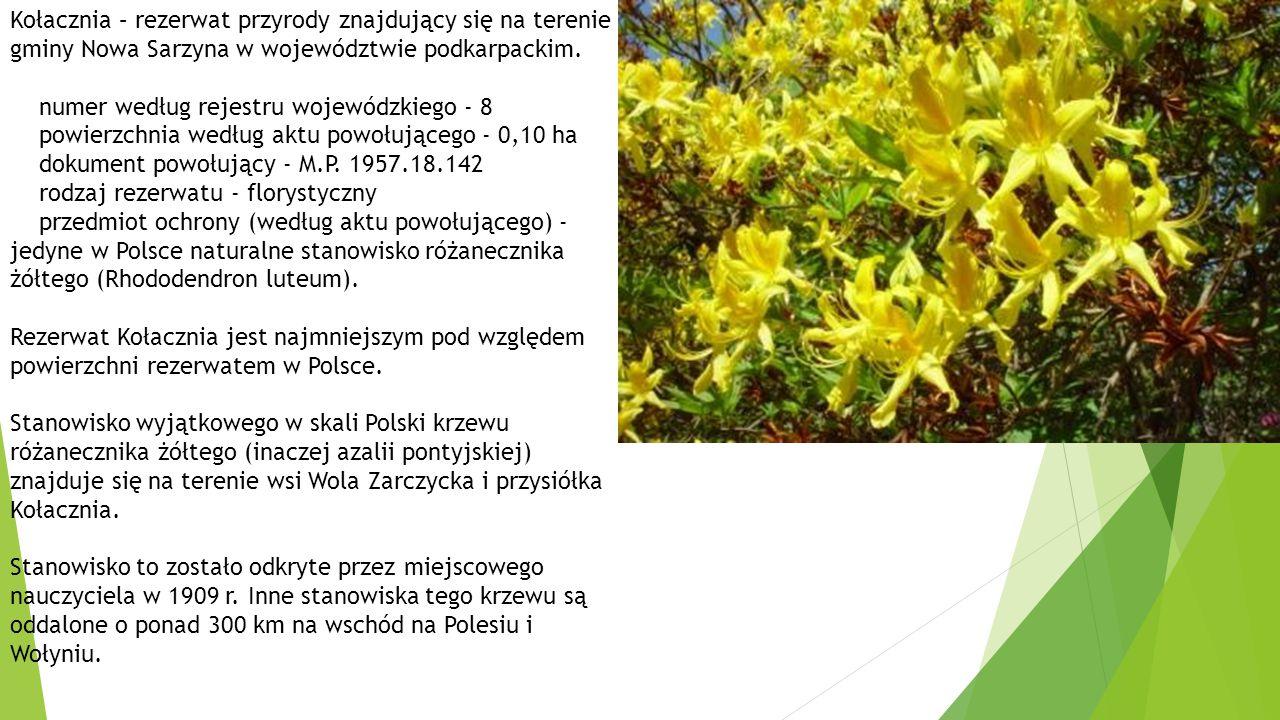 Kołacznia – rezerwat przyrody znajdujący się na terenie gminy Nowa Sarzyna w województwie podkarpackim.