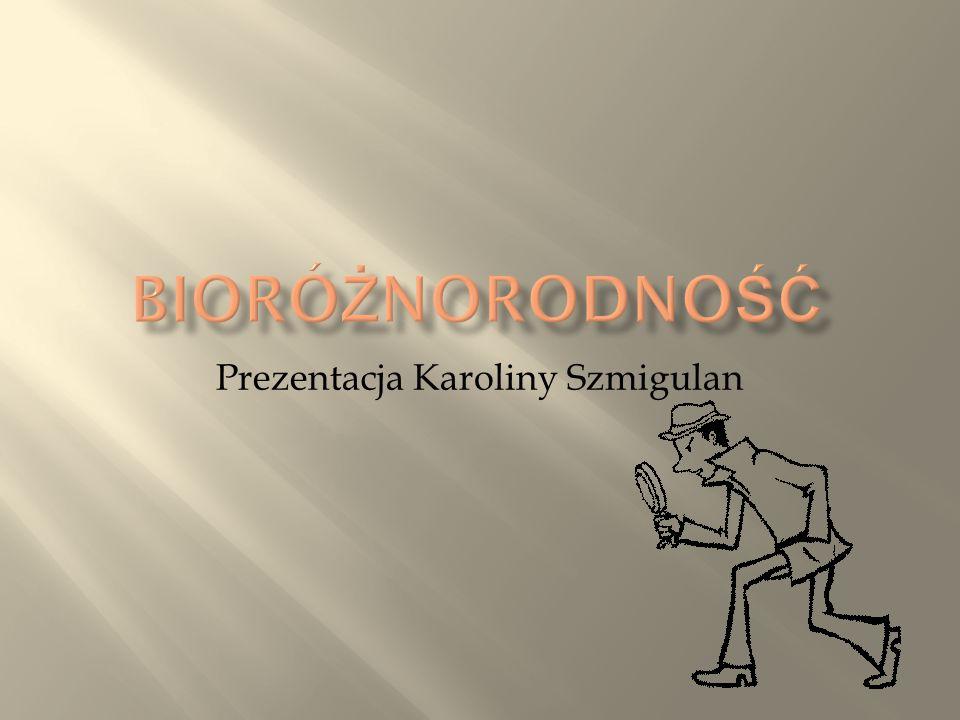 Prezentacja Karoliny Szmigulan