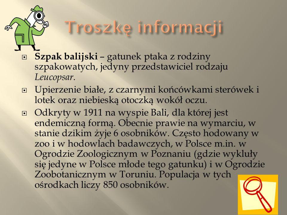 Troszkę informacji Szpak balijski – gatunek ptaka z rodziny szpakowatych, jedyny przedstawiciel rodzaju Leucopsar.