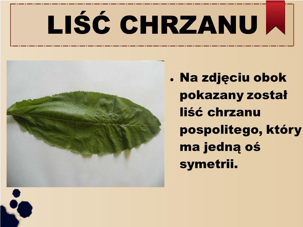 LIŚĆ CHRZANU Na zdjęciu obok pokazany został liść chrzanu pospolitego, który ma jedną oś symetrii.