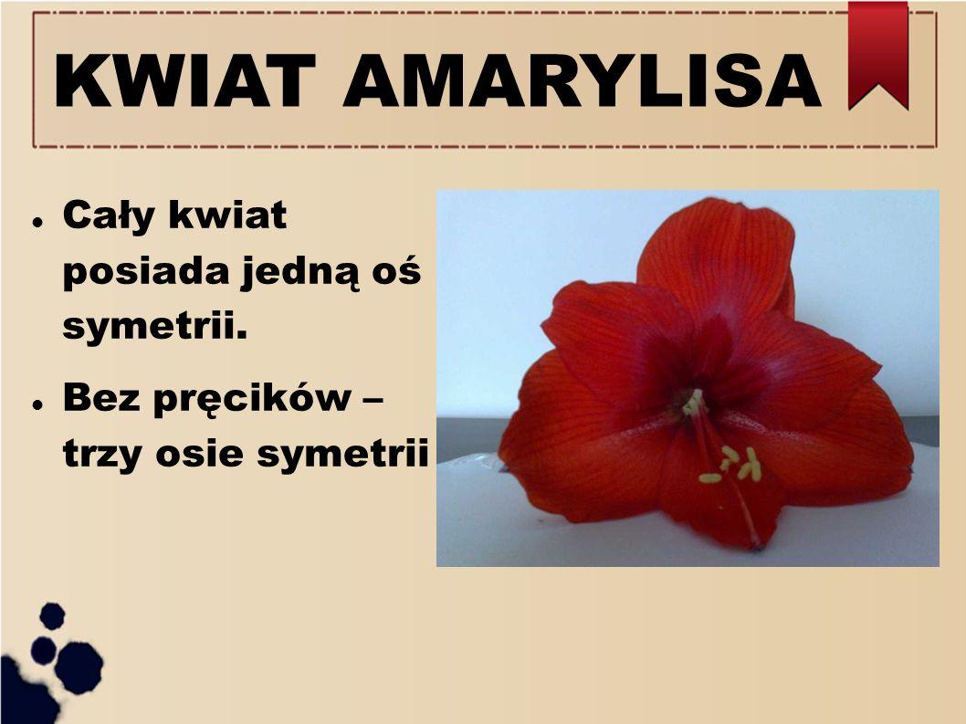 KWIAT AMARYLISA Cały kwiat posiada jedną oś symetrii.