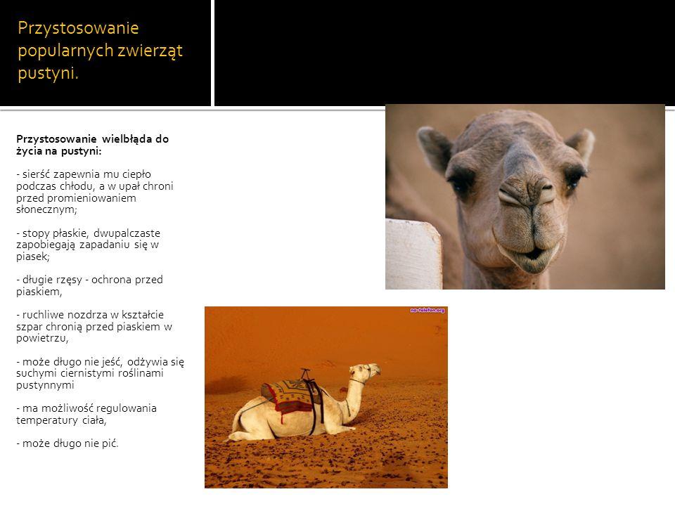 Przystosowanie popularnych zwierząt pustyni.