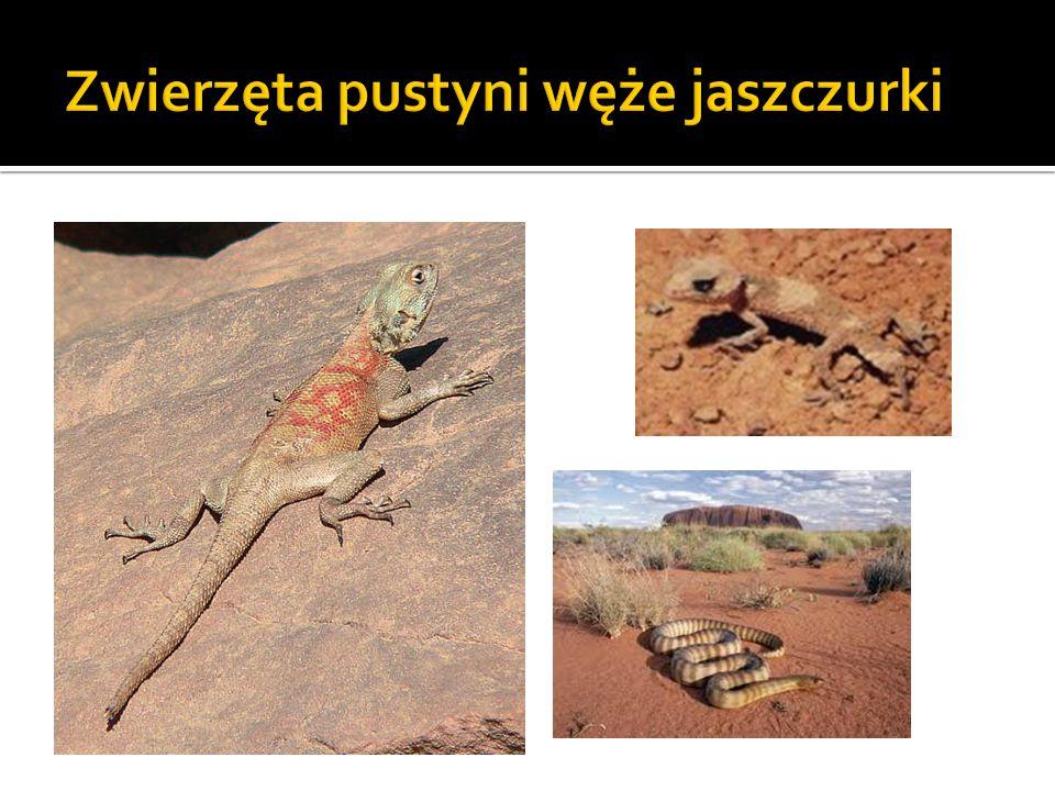 Zwierzęta pustyni węże jaszczurki