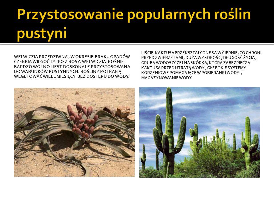 Przystosowanie popularnych roślin pustyni