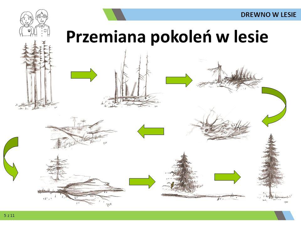 Przemiana pokoleń w lesie