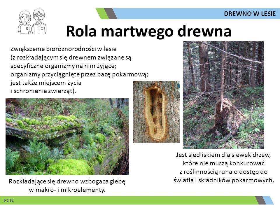 Rozkładające się drewno wzbogaca glebę w makro- i mikroelementy.