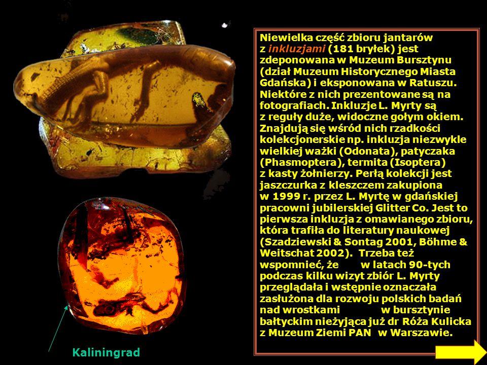 Niewielka część zbioru jantarów z inkluzjami (181 bryłek) jest zdeponowana w Muzeum Bursztynu (dział Muzeum Historycznego Miasta Gdańska) i eksponowana w Ratuszu. Niektóre z nich prezentowane są na fotografiach. Inkluzje L. Myrty są z reguły duże, widoczne gołym okiem. Znajdują się wśród nich rzadkości kolekcjonerskie np. inkluzja niezwykle wielkiej ważki (Odonata), patyczaka (Phasmoptera), termita (Isoptera) z kasty żołnierzy. Perłą kolekcji jest jaszczurka z kleszczem zakupiona w 1999 r. przez L. Myrtę w gdańskiej pracowni jubilerskiej Glitter Co. Jest to pierwsza inkluzja z omawianego zbioru, która trafiła do literatury naukowej (Szadziewski & Sontag 2001, Böhme & Weitschat 2002). Trzeba też wspomnieć, że w latach 90-tych podczas kilku wizyt zbiór L. Myrty przeglądała i wstępnie oznaczała zasłużona dla rozwoju polskich badań nad wrostkami w bursztynie bałtyckim nieżyjąca już dr Róża Kulicka z Muzeum Ziemi PAN w Warszawie.