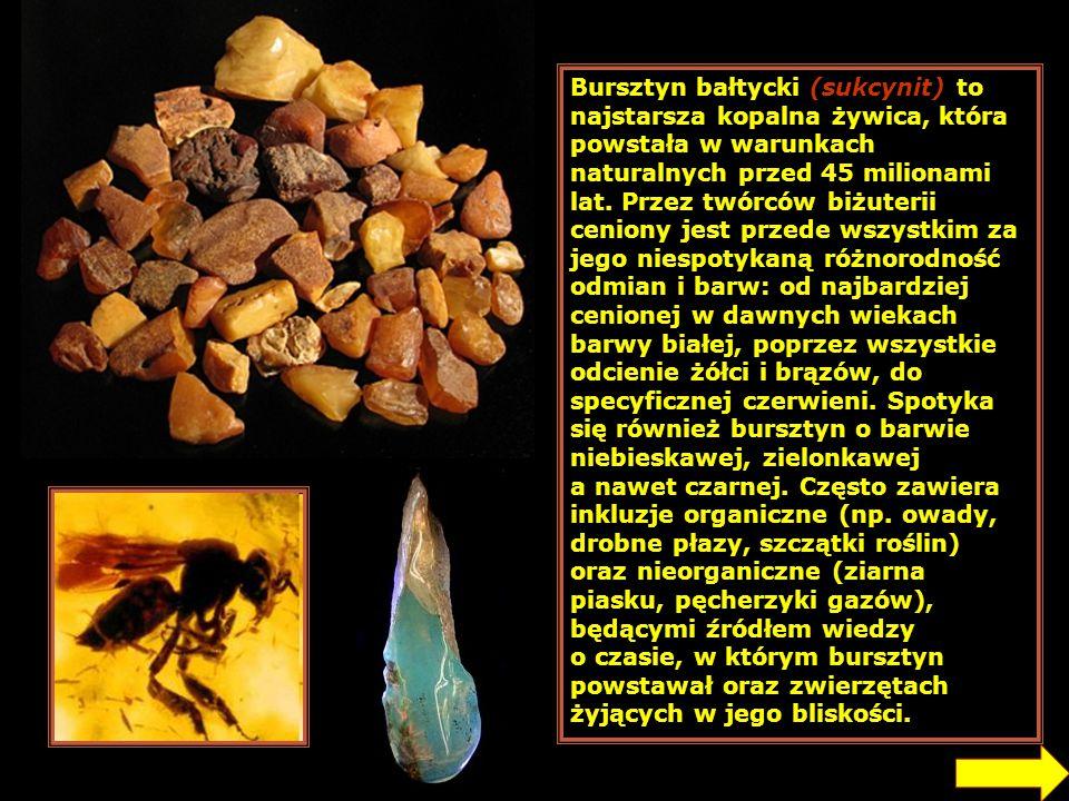 Bursztyn bałtycki (sukcynit) to najstarsza kopalna żywica, która powstała w warunkach naturalnych przed 45 milionami lat. Przez twórców biżuterii ceniony jest przede wszystkim za jego niespotykaną różnorodność odmian i barw: od najbardziej cenionej w dawnych wiekach barwy białej, poprzez wszystkie odcienie żółci i brązów, do specyficznej czerwieni. Spotyka się również bursztyn o barwie niebieskawej, zielonkawej a nawet czarnej. Często zawiera inkluzje organiczne (np. owady, drobne płazy, szczątki roślin) oraz nieorganiczne (ziarna piasku, pęcherzyki gazów), będącymi źródłem wiedzy o czasie, w którym bursztyn powstawał oraz zwierzętach żyjących w jego bliskości.