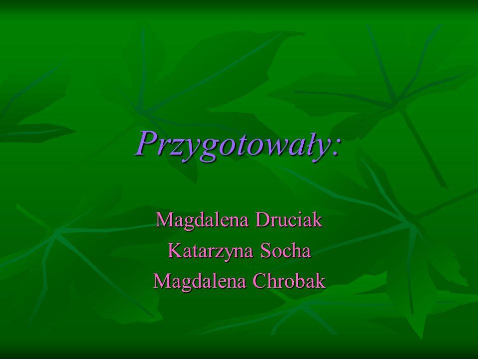 Magdalena Druciak Katarzyna Socha Magdalena Chrobak