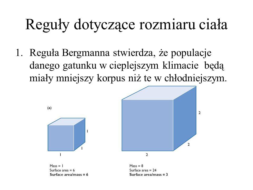 Reguły dotyczące rozmiaru ciała