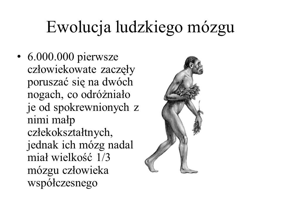 Ewolucja ludzkiego mózgu