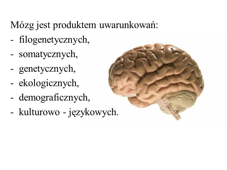 Mózg jest produktem uwarunkowań: