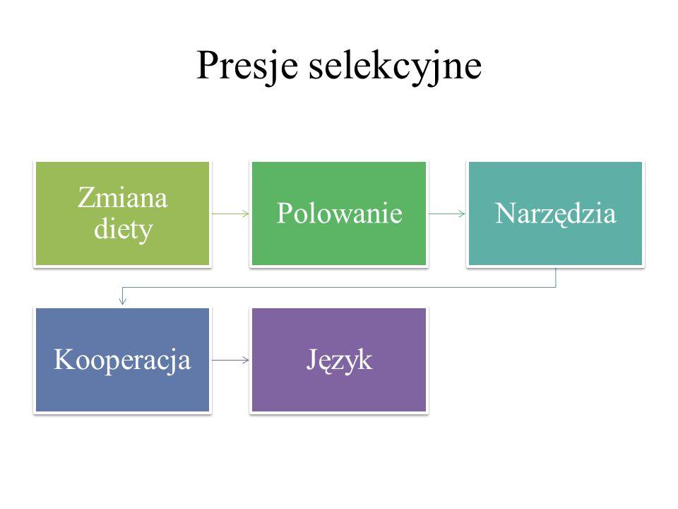 Presje selekcyjne Zmiana diety Polowanie Narzędzia Kooperacja Język