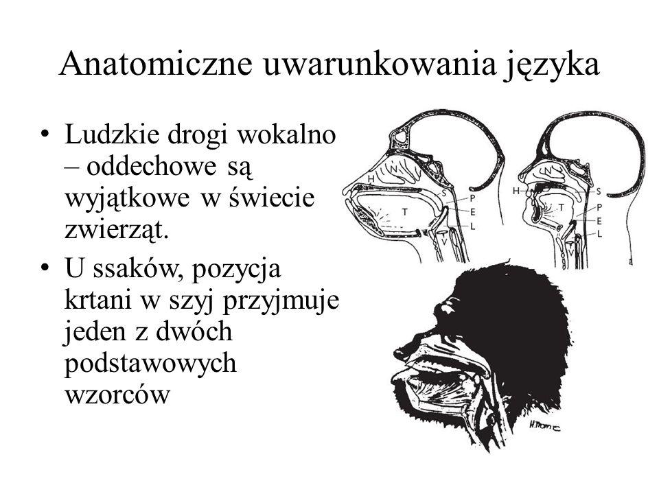 Anatomiczne uwarunkowania języka