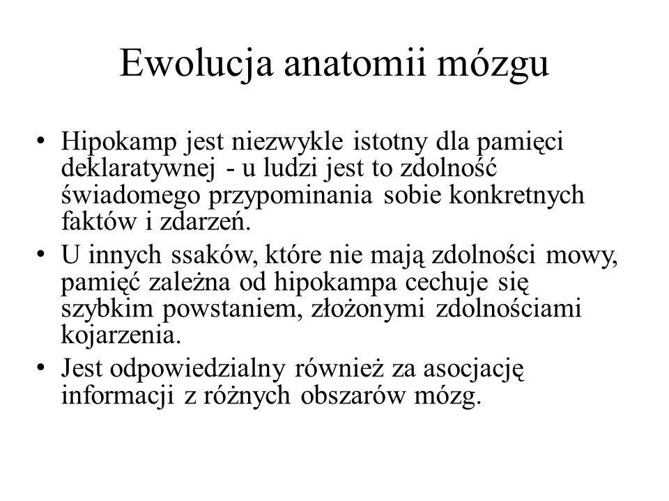 Ewolucja anatomii mózgu