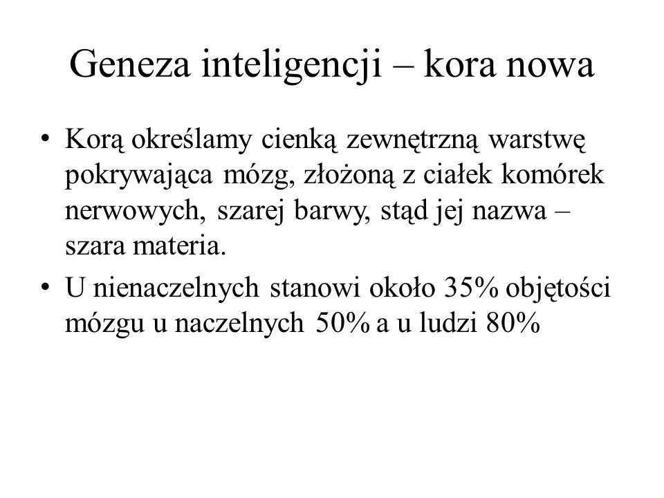 Geneza inteligencji – kora nowa