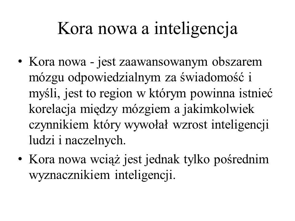Kora nowa a inteligencja