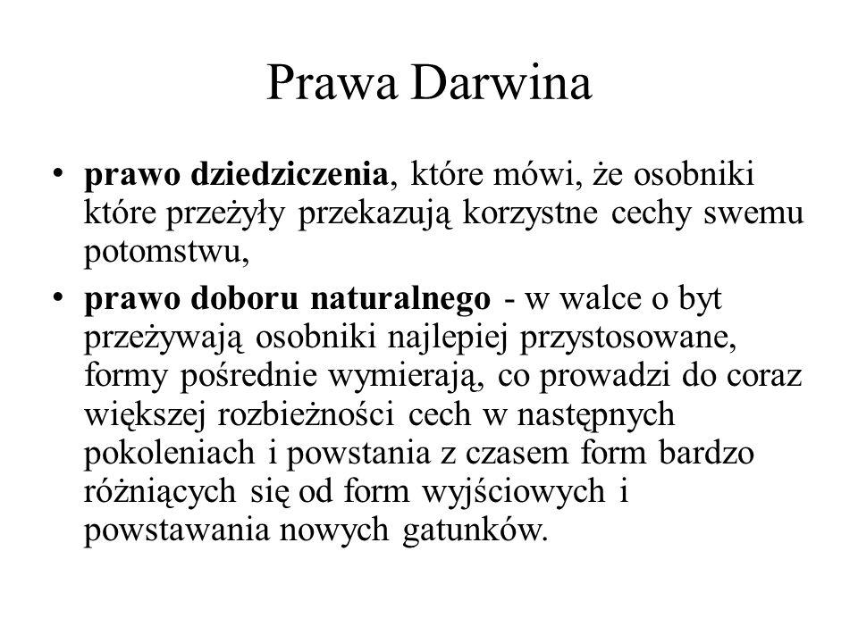 Prawa Darwina prawo dziedziczenia, które mówi, że osobniki które przeżyły przekazują korzystne cechy swemu potomstwu,