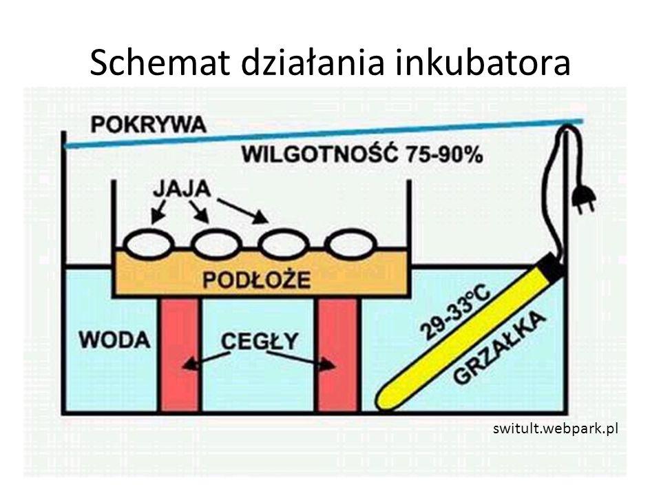 Schemat działania inkubatora