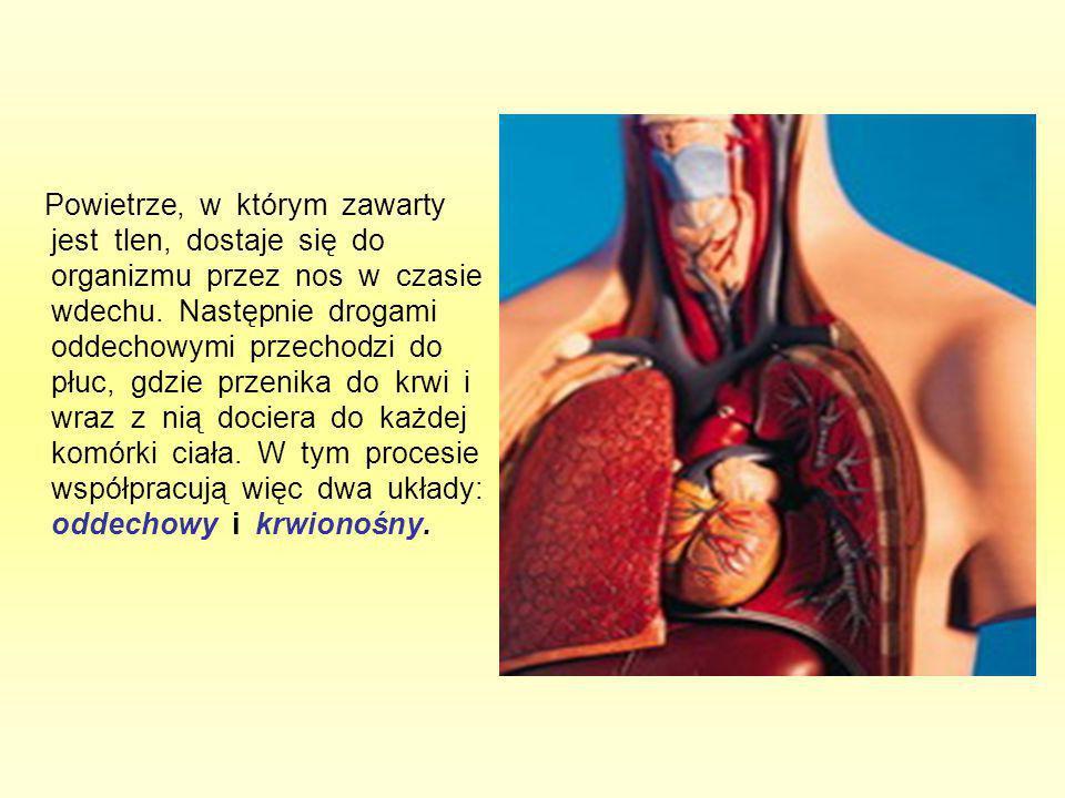 Powietrze, w którym zawarty jest tlen, dostaje się do organizmu przez nos w czasie wdechu.