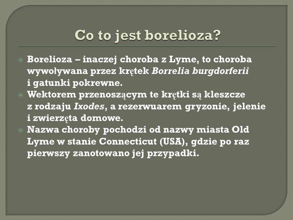 Co to jest borelioza Borelioza – inaczej choroba z Lyme, to choroba wywoływana przez krętek Borrelia burgdorferii i gatunki pokrewne.
