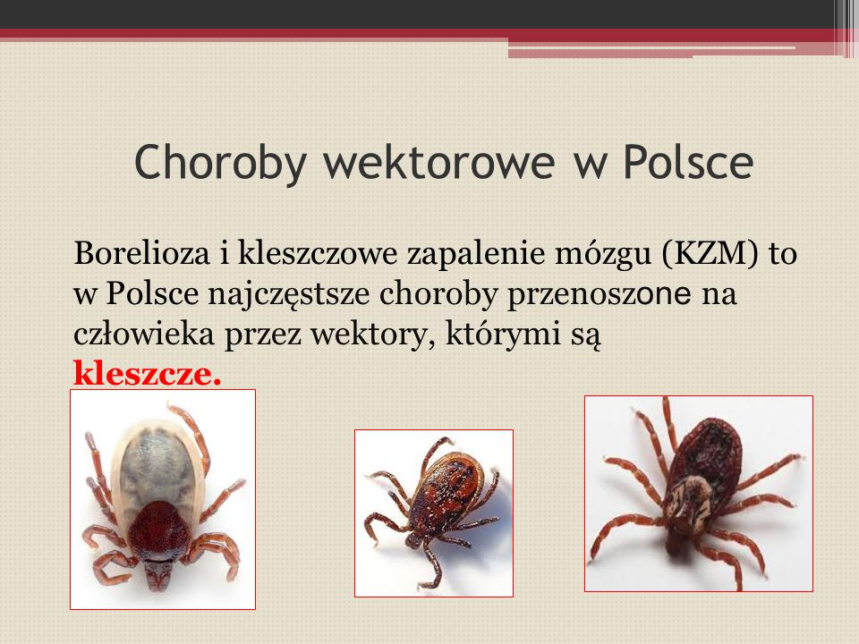 Choroby wektorowe w Polsce