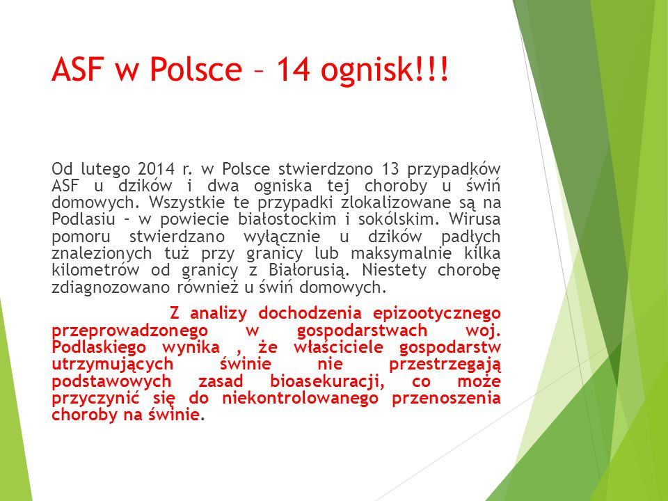 ASF w Polsce – 14 ognisk!!!