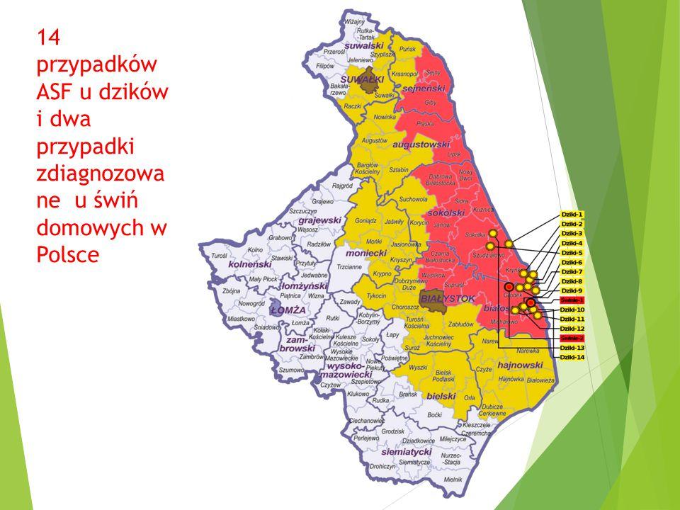 14 przypadków ASF u dzików i dwa przypadki zdiagnozowane u świń domowych w Polsce