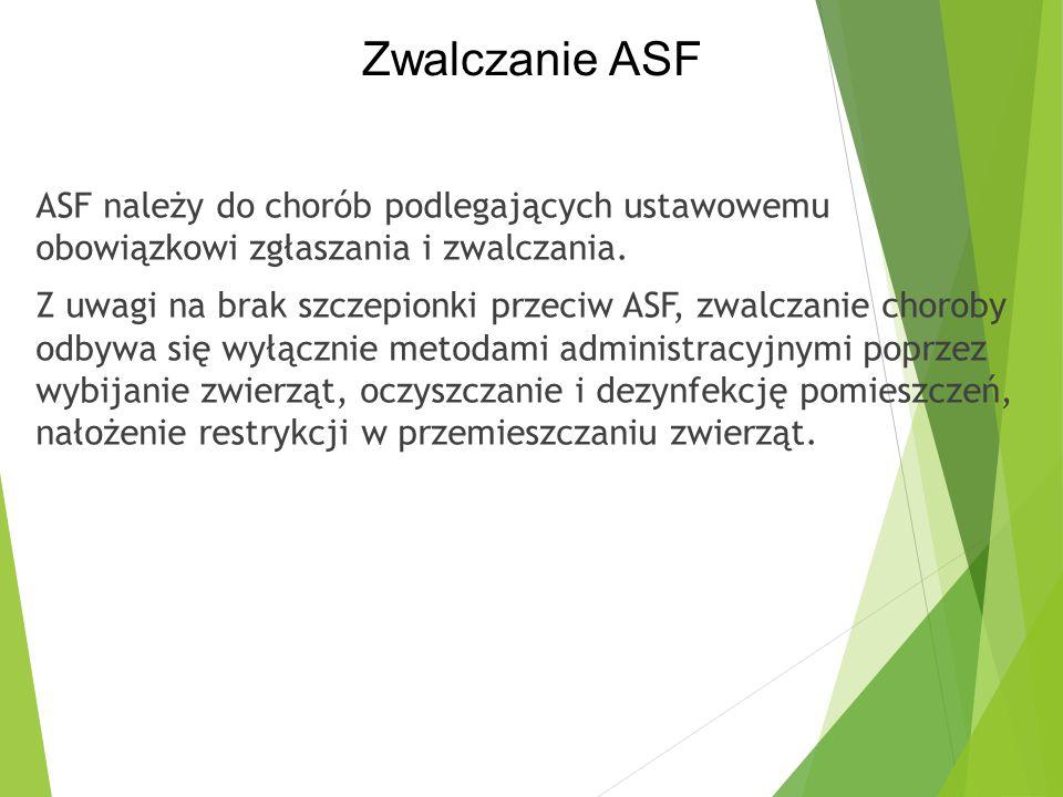 Zwalczanie ASF
