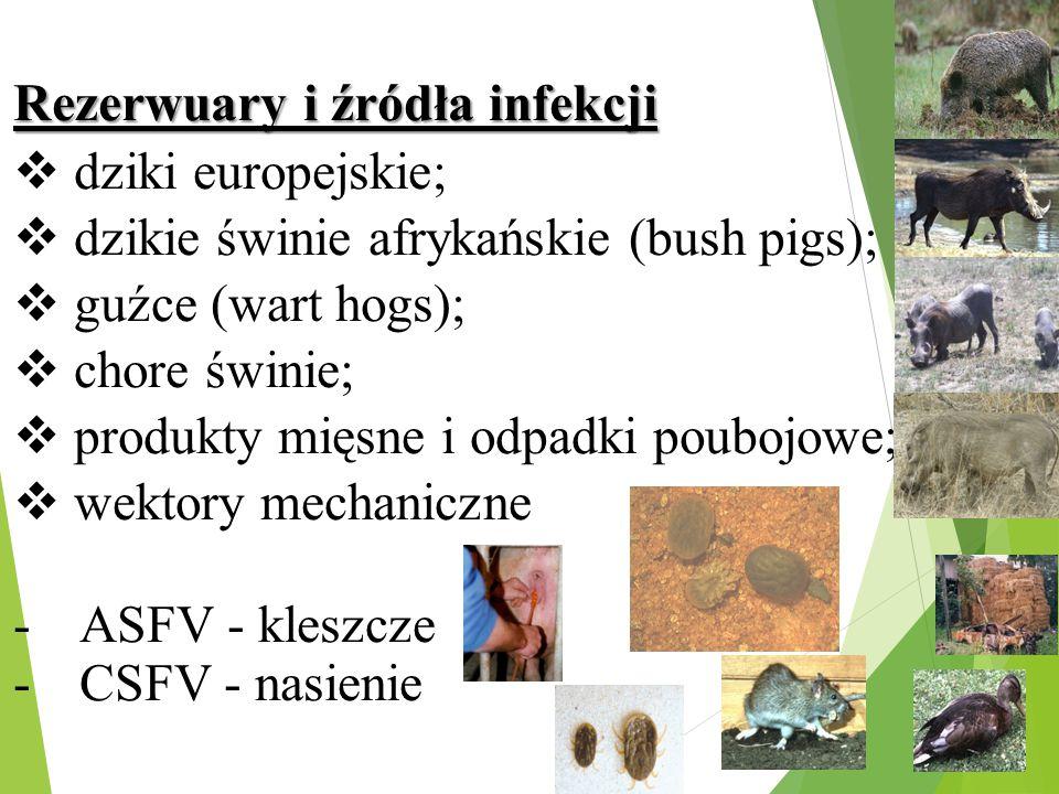 Rezerwuary i źródła infekcji