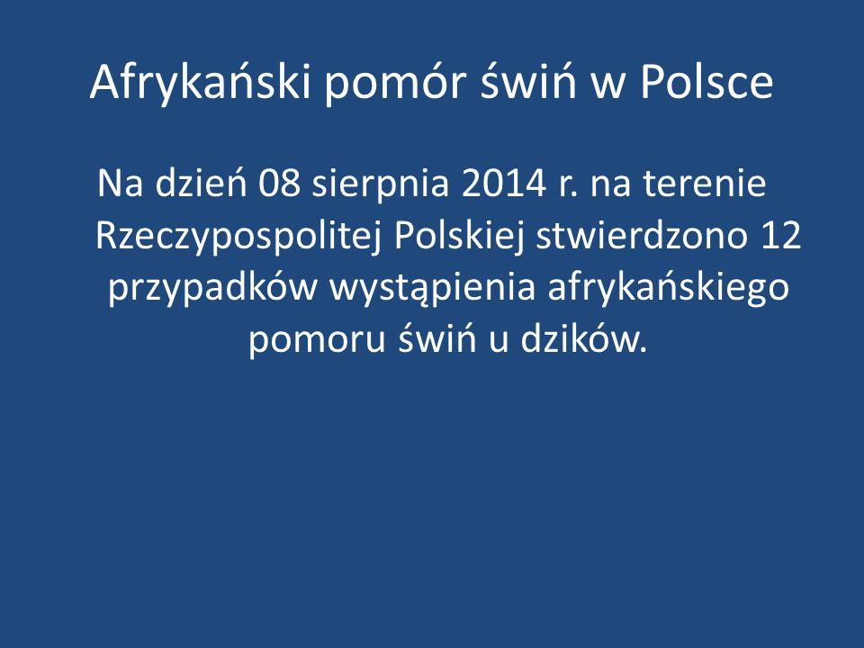 Afrykański pomór świń w Polsce