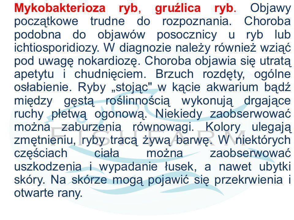 Mykobakterioza ryb, gruźlica ryb