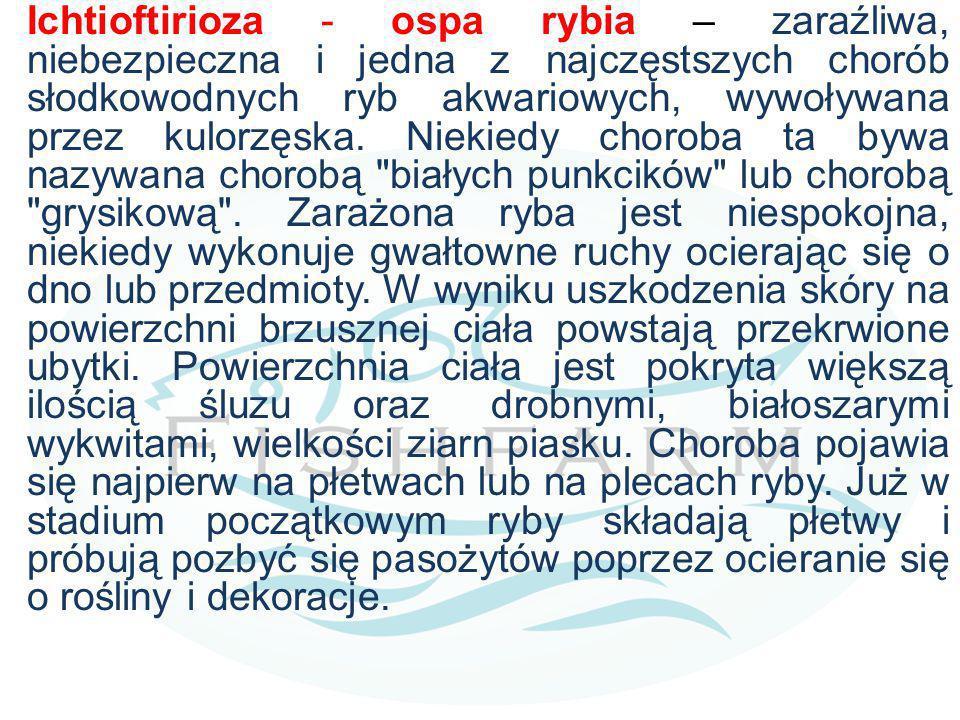 Ichtioftirioza - ospa rybia – zaraźliwa, niebezpieczna i jedna z najczęstszych chorób słodkowodnych ryb akwariowych, wywoływana przez kulorzęska.