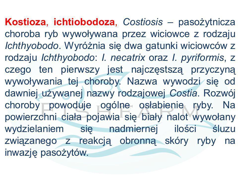 Kostioza, ichtiobodoza, Costiosis – pasożytnicza choroba ryb wywoływana przez wiciowce z rodzaju Ichthyobodo.