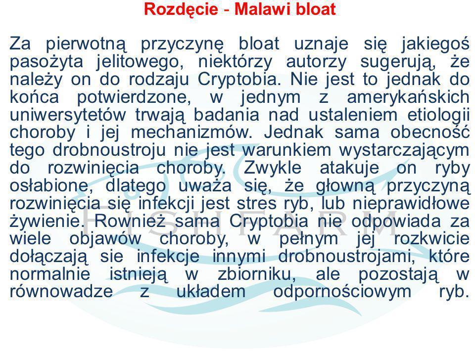 Rozdęcie - Malawi bloat Za pierwotną przyczynę bloat uznaje się jakiegoś pasożyta jelitowego, niektórzy autorzy sugerują, że należy on do rodzaju Cryptobia.