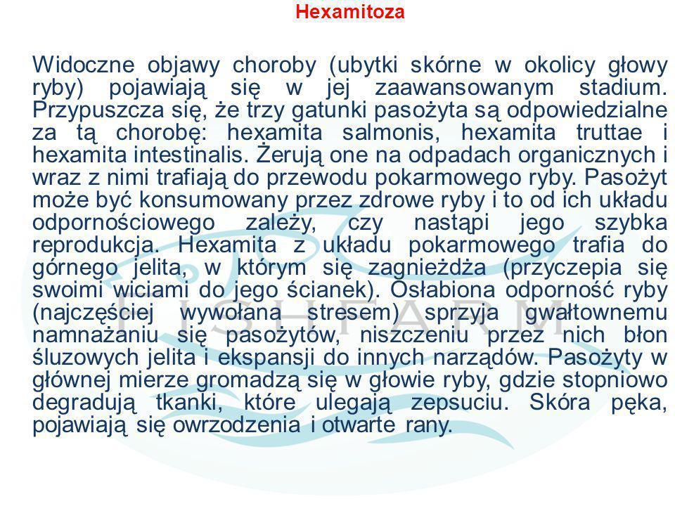 Hexamitoza