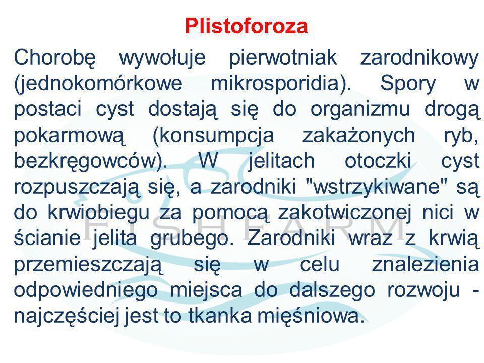 Plistoforoza