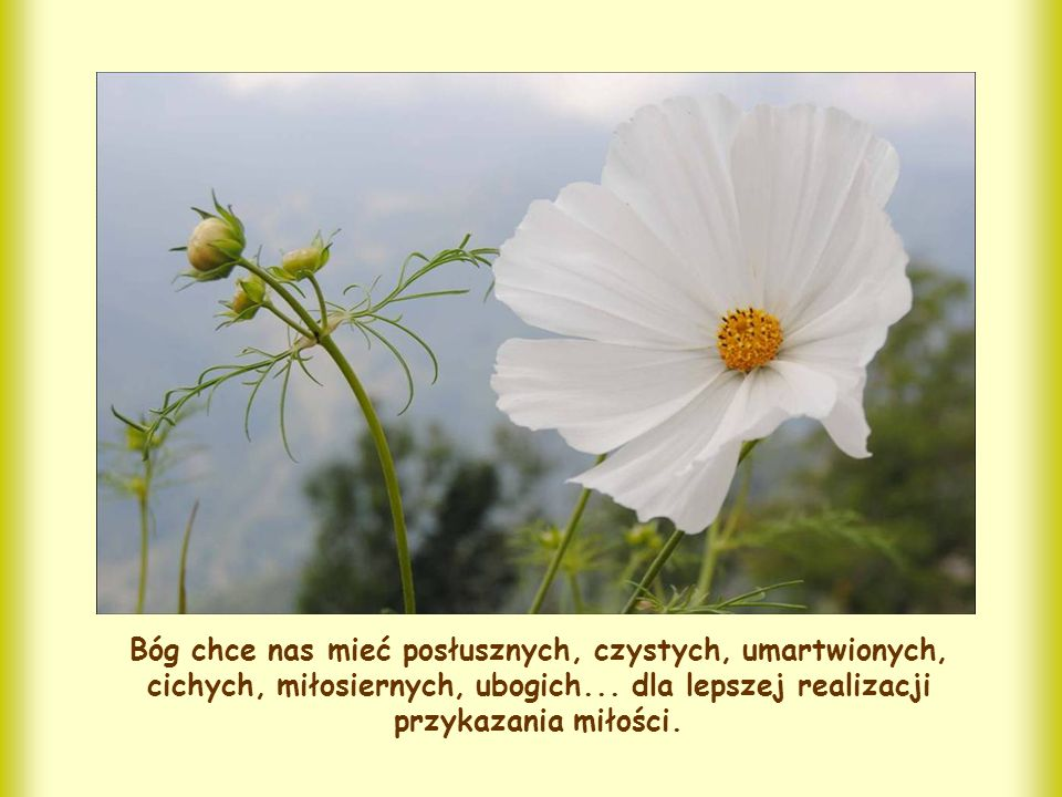 Bóg chce nas mieć posłusznych, czystych, umartwionych, cichych, miłosiernych, ubogich...