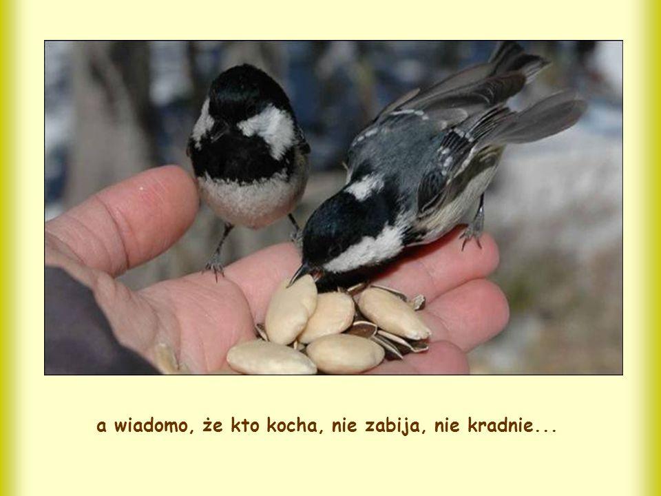 a wiadomo, że kto kocha, nie zabija, nie kradnie...
