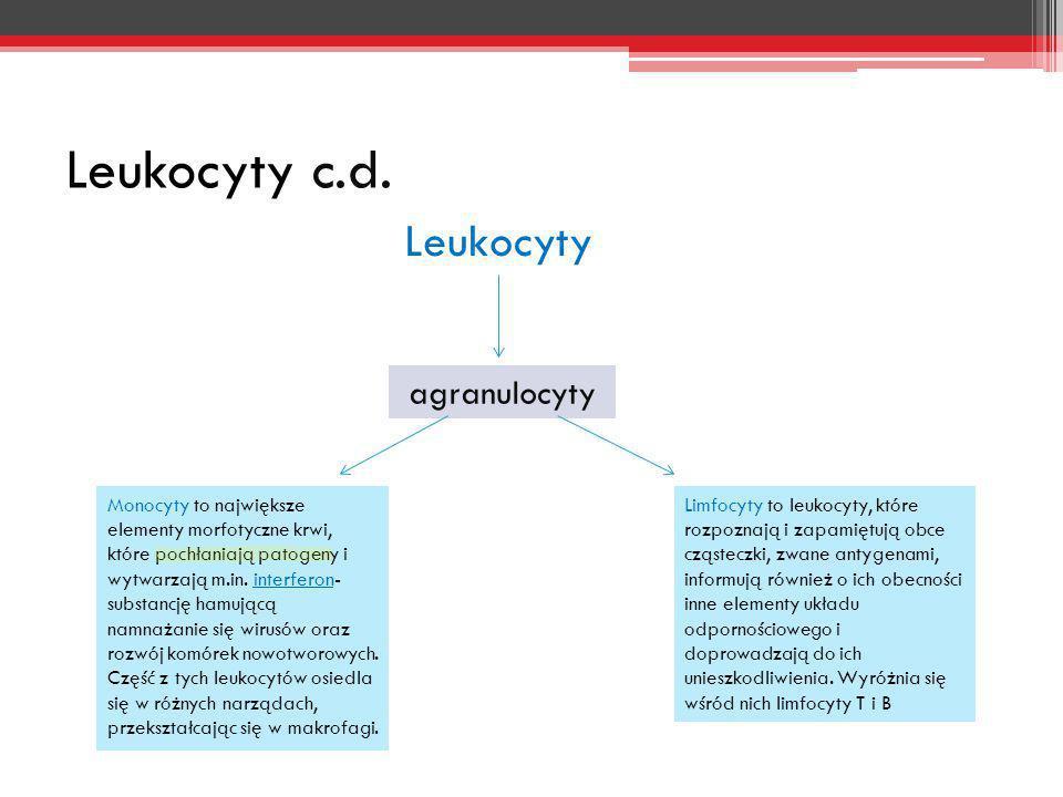 Leukocyty c.d. Leukocyty agranulocyty