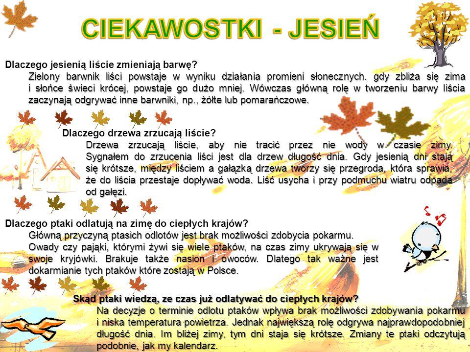 CIEKAWOSTKI - JESIEŃ Dlaczego jesienią liście zmieniają barwę