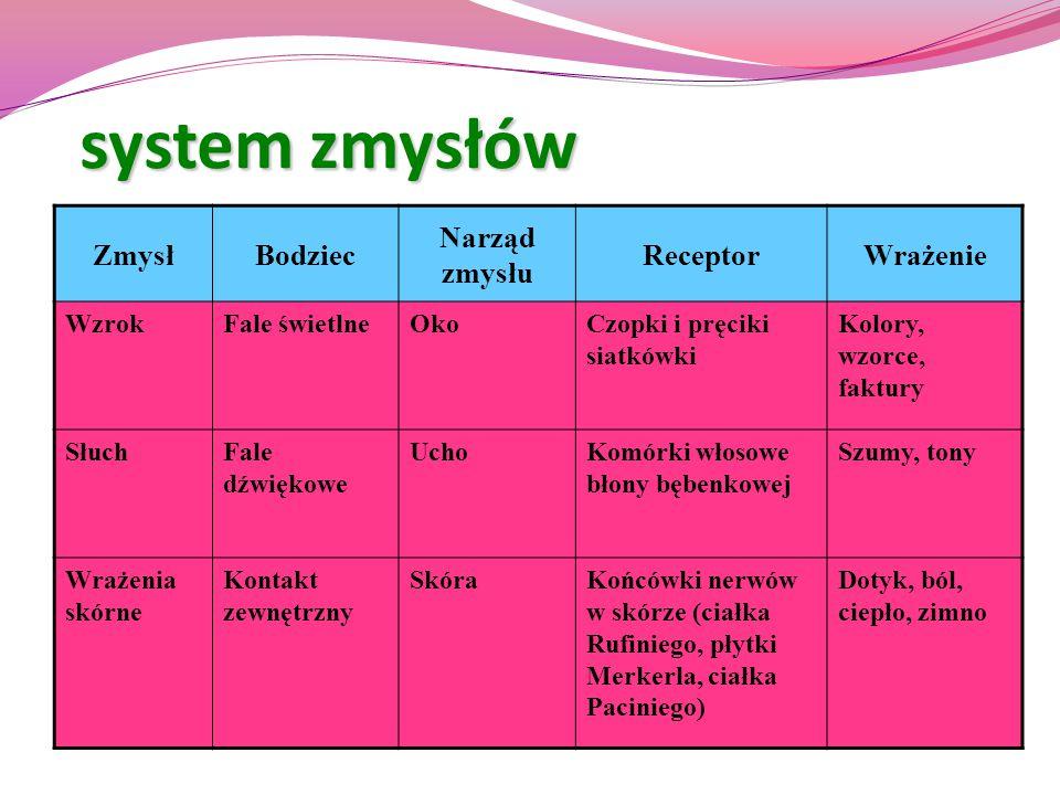 system zmysłów Zmysł Bodziec Narząd zmysłu Receptor Wrażenie Wzrok