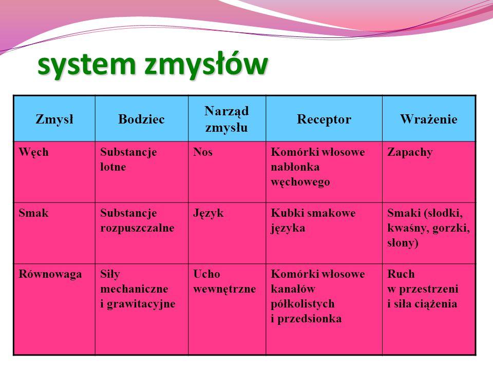 system zmysłów Zmysł Bodziec Narząd zmysłu Receptor Wrażenie Węch