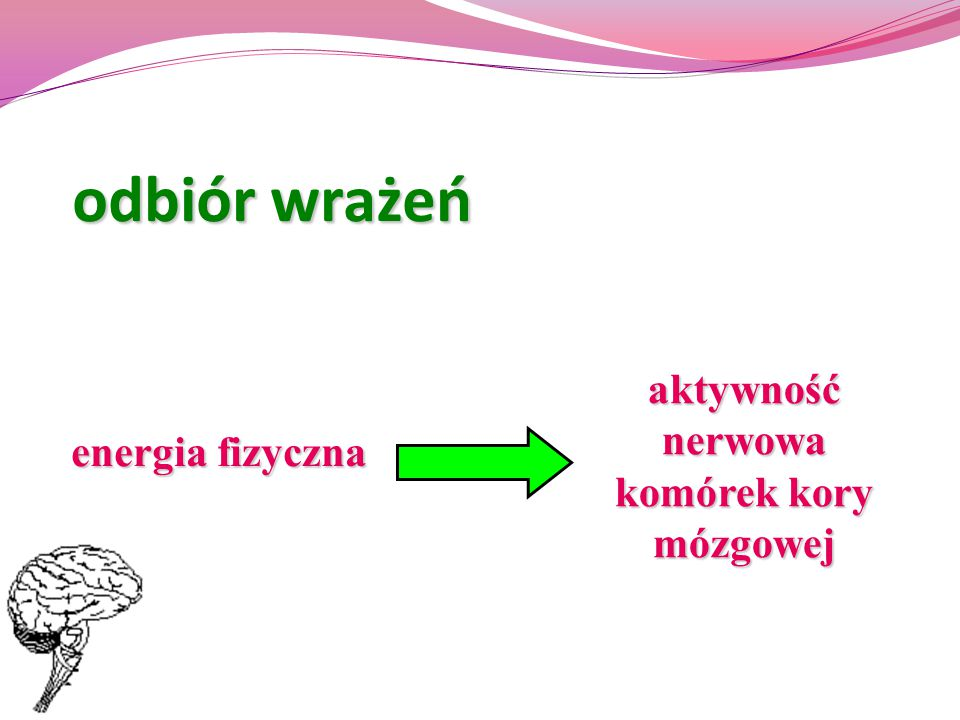 aktywność nerwowa komórek kory mózgowej