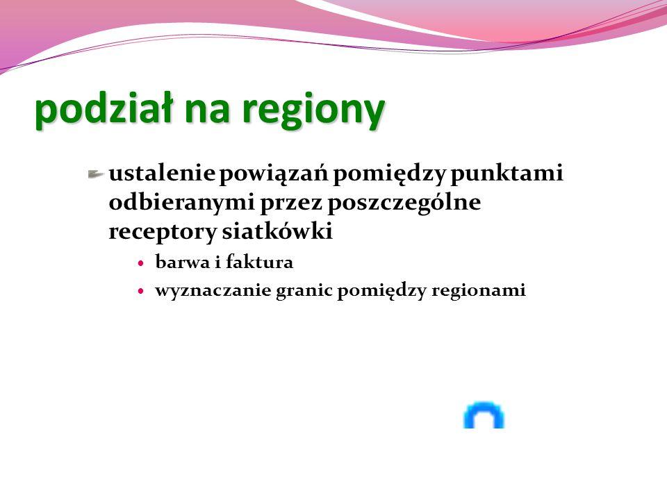 podział na regiony ustalenie powiązań pomiędzy punktami odbieranymi przez poszczególne receptory siatkówki.