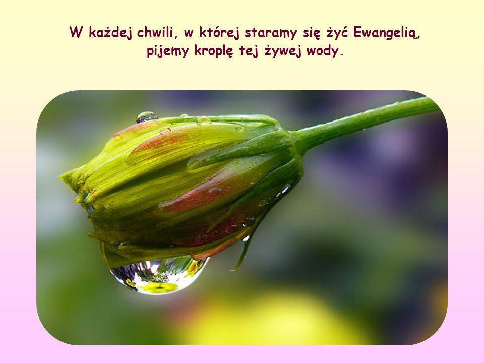 W każdej chwili, w której staramy się żyć Ewangelią, pijemy kroplę tej żywej wody.