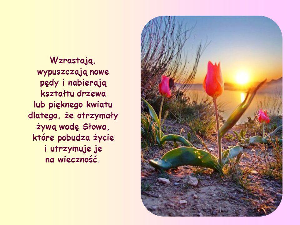 Wzrastają, wypuszczają nowe pędy i nabierają kształtu drzewa lub pięknego kwiatu dlatego, że otrzymały żywą wodę Słowa, które pobudza życie i utrzymuje je na wieczność.