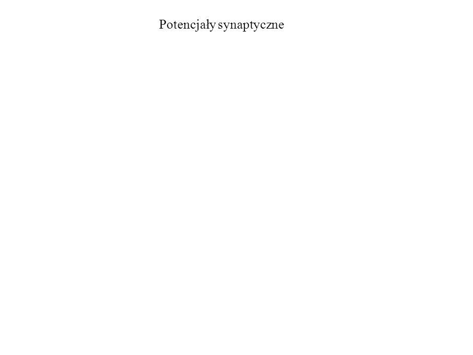 Potencjały synaptyczne