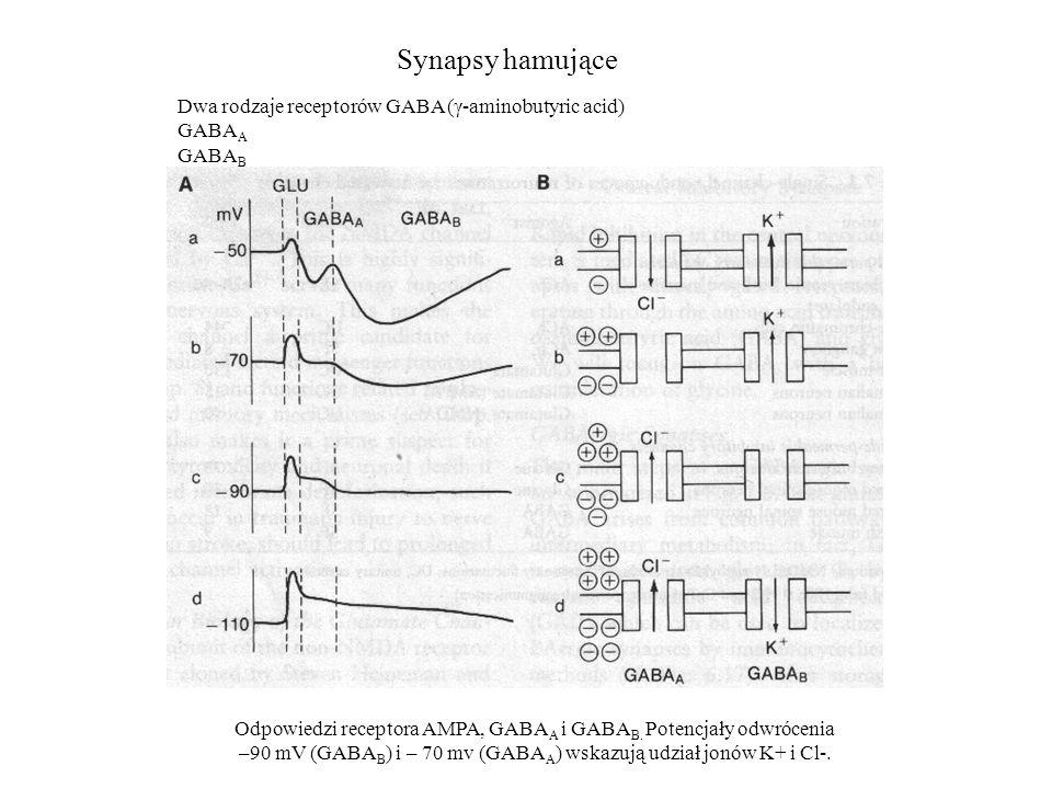 Synapsy hamujące Dwa rodzaje receptorów GABA (γ-aminobutyric acid)